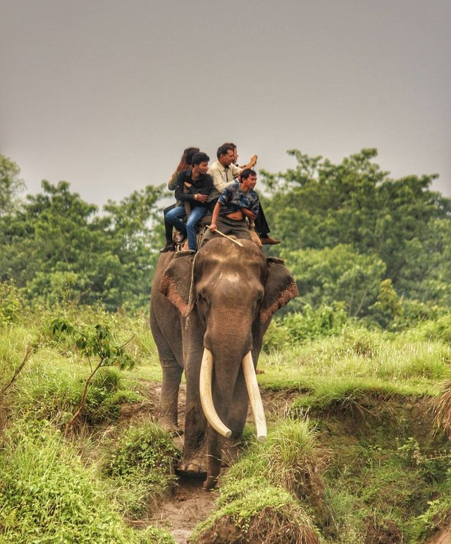 Sauraha; the heart of the jungle [Visit Nepal 2020] 2